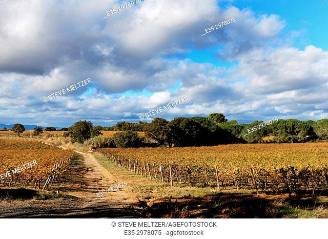 Fall colors of the vineyards of the Domaine la Baume in Servian, France line a vineyard access road,