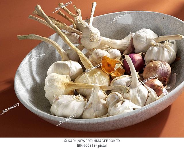 Bulbs of Garlic (Allium sativum) in a porcelain bowl