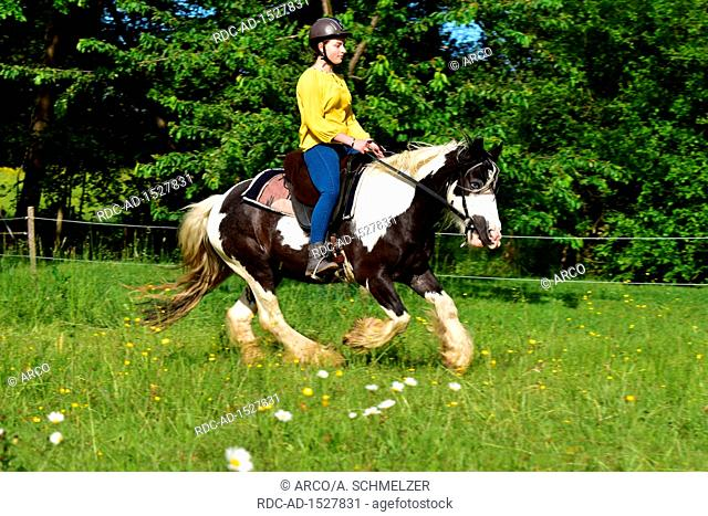 Girl with Gypsy Cob, piebald