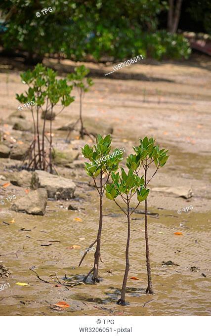 Trees beside Mid-Sea Road; Okinawa; Japan; plant