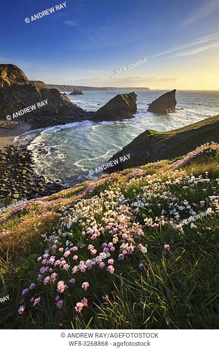 Samphire Island near Portreath on the North Coast of Cornwall, captured from the coast path, shortly before sunset in mid May