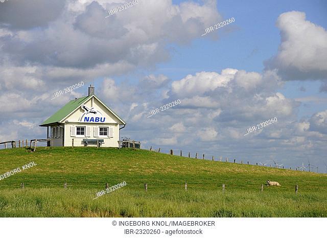 NABU house on a terp, Hamburger Hallig, North Frisia, Schleswig-Holstein, Germany, Europe, PublicGround