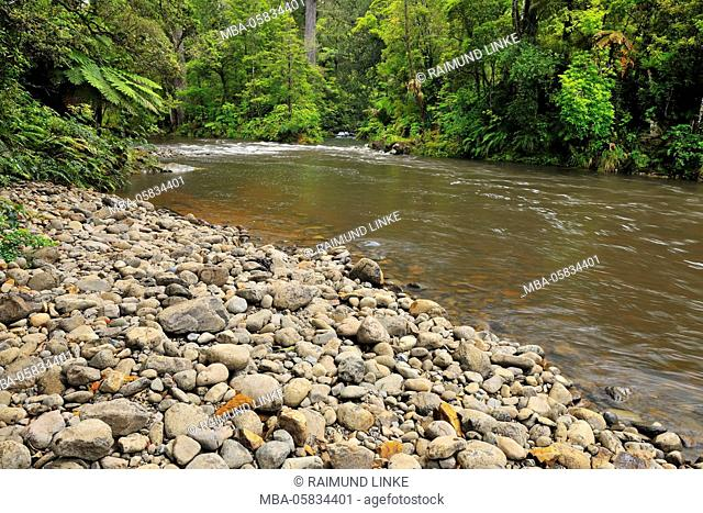 Forest Stream, Waipoua Kauri Forest, Northland, North Island, New Zealand