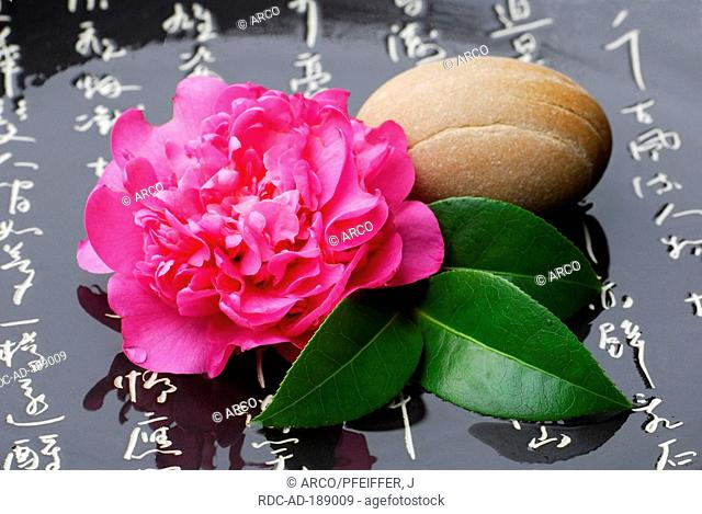Camellia and stone, japanese characters, Camellia japonica
