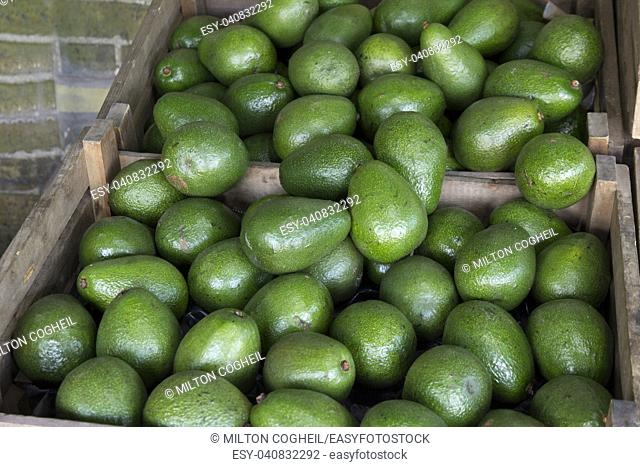 Avocados for sale in wooden boxes on a market stall