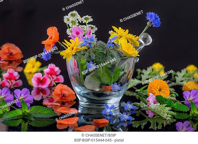 Natural herb and flower selection used in herbal medicine