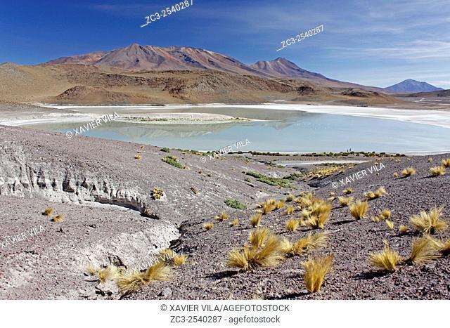 Laguna Hedionda, lagoon with salt, near the salar de Uyuni, national reserve of Andean Fauna Eduardo Avaroa in the South Lipez Province, Department of Potosi