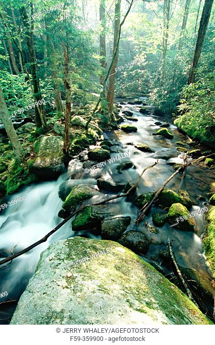 Cosby creek. Great Smoky Mountains National Park. Tennessee. USA