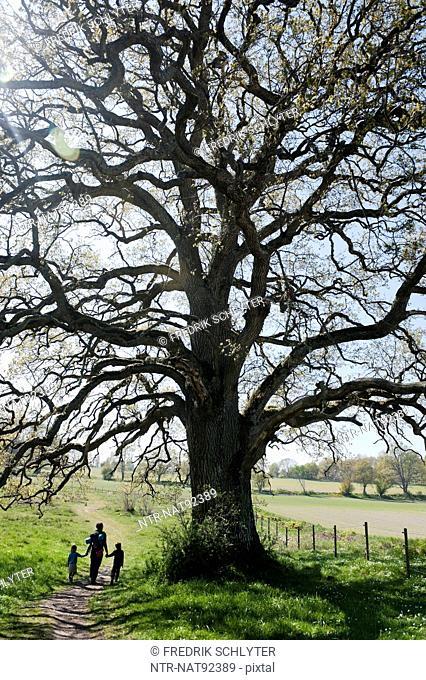 Woman with children walking under high oak tree