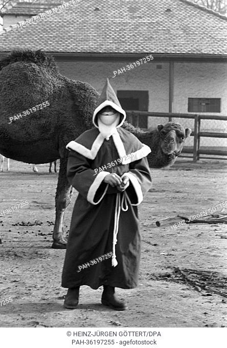 A man dressed as Santa Claus is standing next to a camel at Frankfurt Zoo on 5 December 1963. | usage worldwide. - Frankfurt/Hessen/Germany