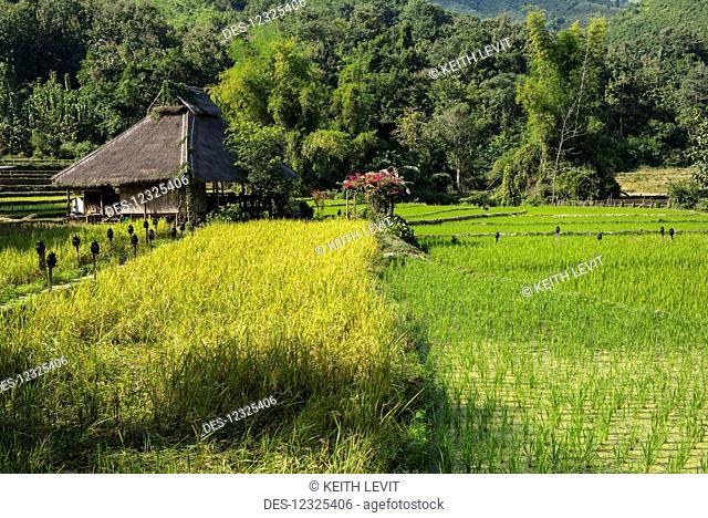 Kamu Lodge and rice fields, Kamu village; Luang Prabang Province, Laos
