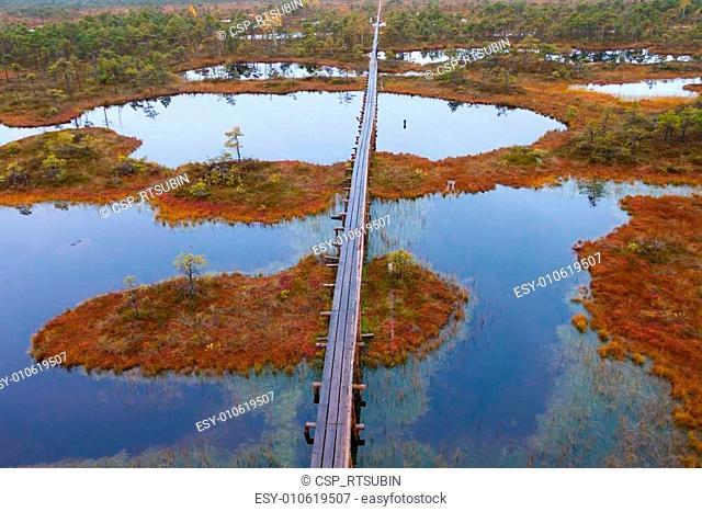 peat bog swamp