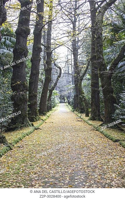 Vegetation in Terra Nostra park Furnas Sao Miguel island. Azores, Portugal