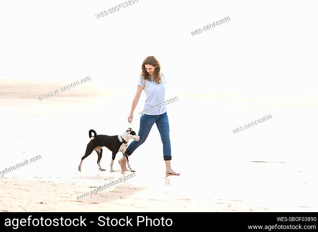 Woman with Jack Russell Terrier walking at beach