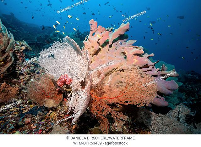 Coral Reef Scenery, Florida Islands, Solomon Islands