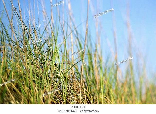 Scenic grass at beach