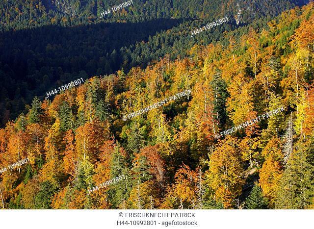 Mixed forest in autumn, Switzerland