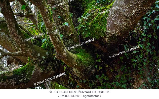 Beech forest in Gorbeia Natural Park