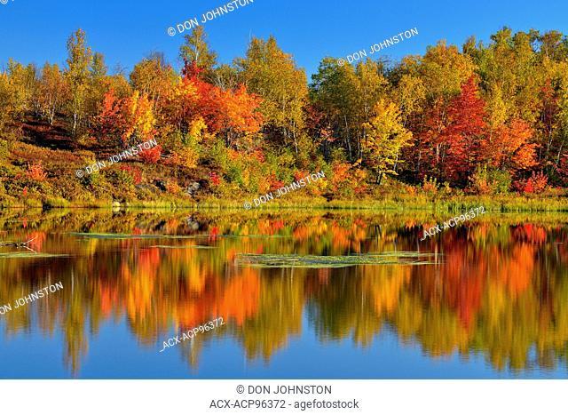 Autumn foliage reflected in a beaver pond, Greater Sudbury, Ontario, Canada