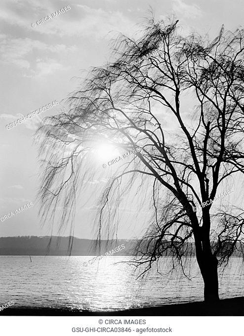 Tree Silhouette at Water's Edge, Potomac Park, Washington DC, USA, Detroit Publishing Company, 1910