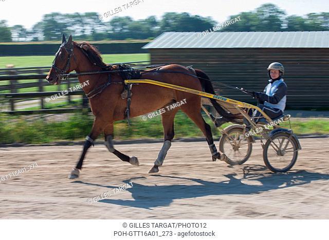 France, Lower Normandy region, Manche (department), stud farm de Bellevent, stable Pierre Levesque, horse training, Camille Levesque, track, Photo Gilles Targat