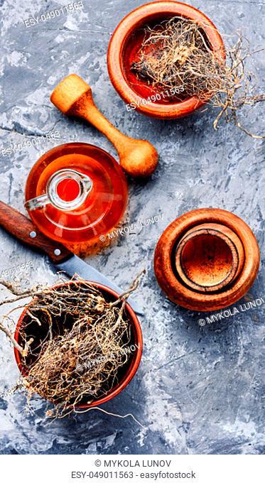 Maral root, medicinal plant of Siberian medicine.Medicinal herb.Natural herbs medicine