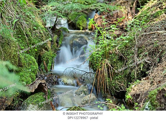 Small stream in the old growth rainforest along the Cheakamus Lake Trail, near Whistler; British Columbia, Canada