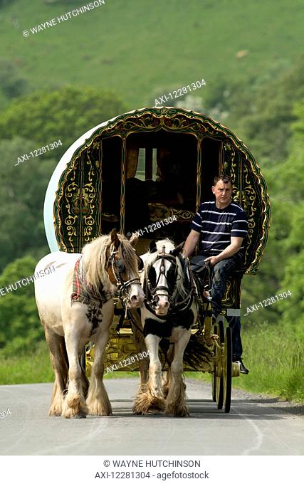 Horse drawn caravans heading towards the horse fair at Appleby in Westmorland; Cumbria, England