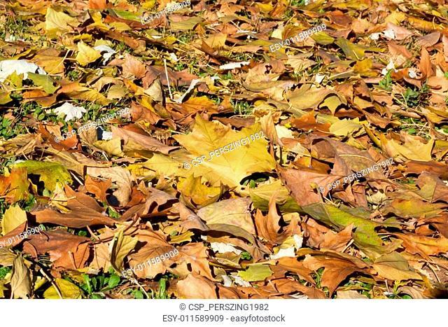 City park in autumn, getafe, madrid