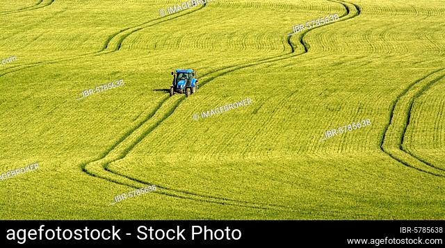 Tractor driving in tracks in a wheat field, Puy de Dome department, Auvergne Rhone Alpes, France, Europe