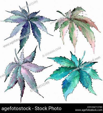Cannabis green leaves in a watercolor style isolated. Aquarelle leaf for background, texture, wrapper pattern, frame or border