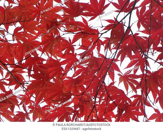 Fall foliage, Ridgewood, New Jersey, USA
