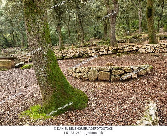 Forest of quercus ilex in Font Roja Natural park, Alcoy, Alicante, Comunidad Valenciana, Spain, Europe