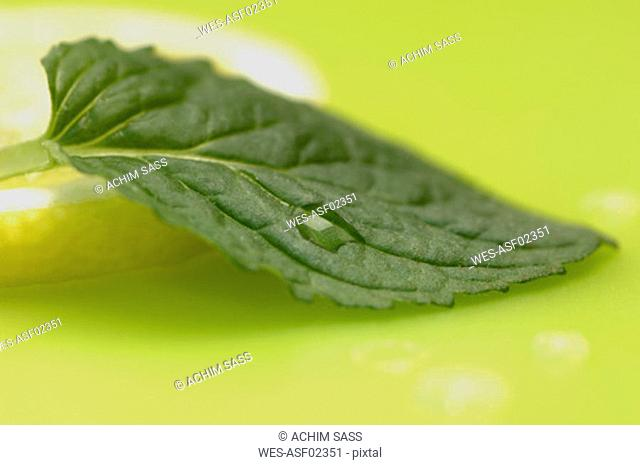 Mint leaf and slice of lemon