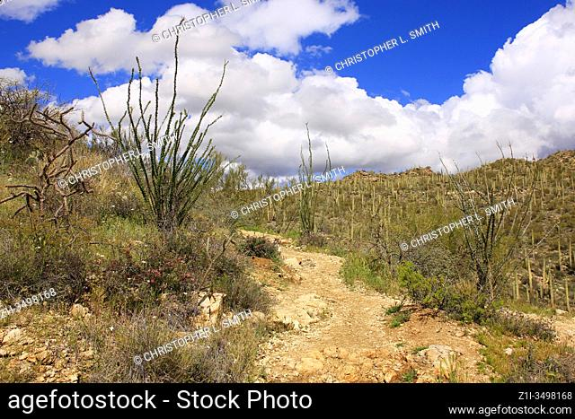 Springtime in the Taque Verde Canyon east of Tucson in Arizona