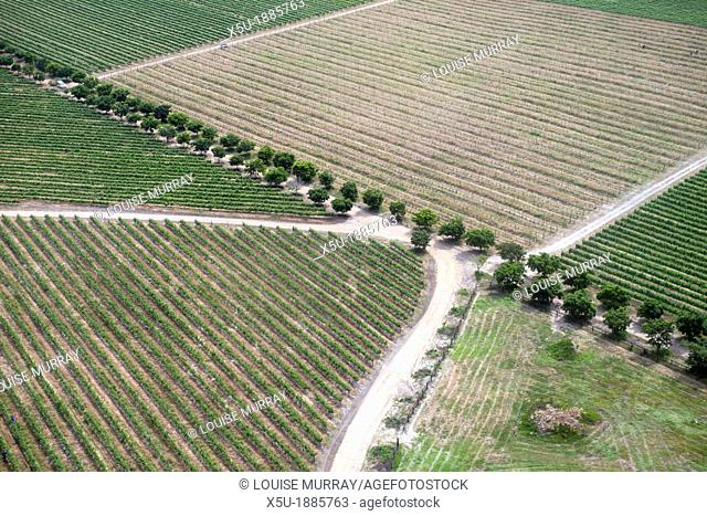 Aerial view of vineyards near Hermanus and Walker Bay, Overberg, Western Cape, South africa