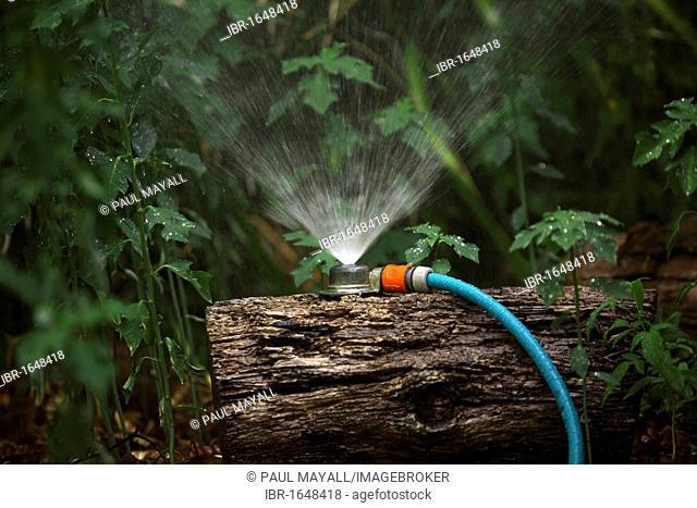 Garden hose and sprinkler