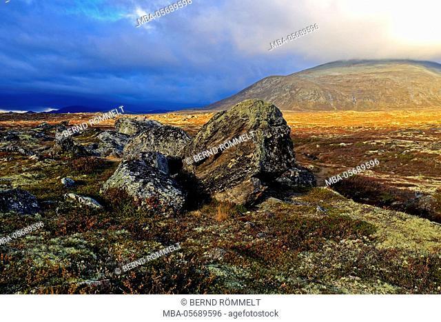 Europe, Norway, region of Trondelag, Süd-Trondelag, Dovrefjell-Sunndalsfjella national park, Fjell