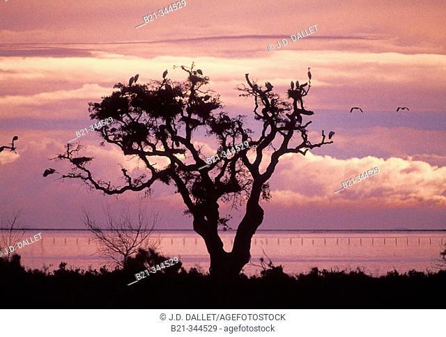 Birds at Doñana National Park. Huelva province, Spain