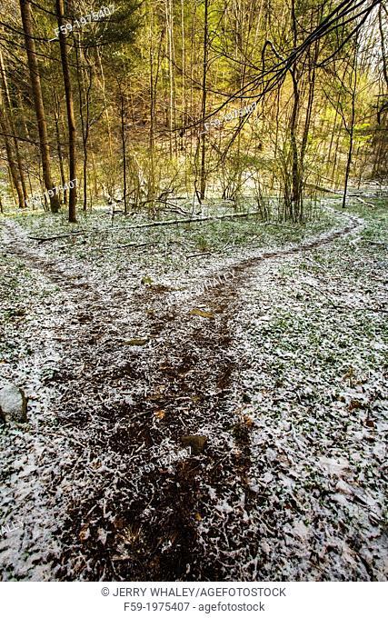 Whiteoak Sink Trail, Great Smoky Mountains NP, TN