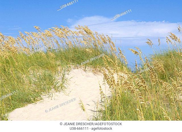 Path through the sand dunes to the Atlantic Ocean, Hatteras Island National Seashore, North Carolina, USA