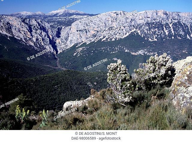 Gorruppu Gorge, near Dorgali, Sardinia, Italy