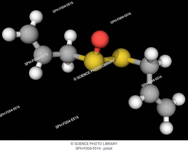Allicin, molecular model. Obtained from garlic, this organosulfur compound has antibacterial and antifungal properties. Atoms are represented as spheres and are...