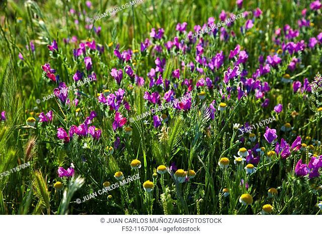 Spring, La Serena, Badajoz, Extremadura, Spain