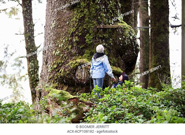 Two hikers look up at a large Sitka Spruce tree (Picea sitchensis) near Kyuquot on the west coast of Vancouver Island, Kyuquot, Vancouver Island