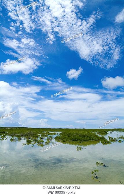 Mangroves growing in the waters near Cayo Santa-Maria, Cuba