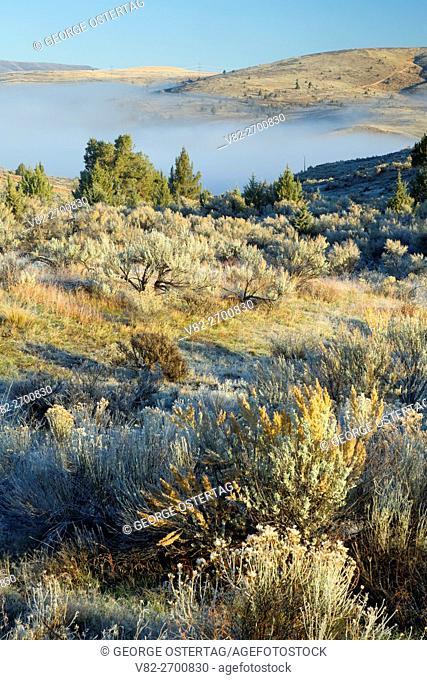 Juniper-sage grassland, Deschutes Wild & Scenic River, Prineville District Bureau of Land Management, Oregon