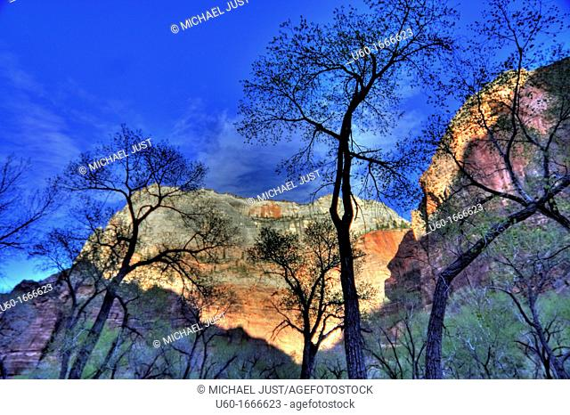 Leaveless trees provide the foreground in Zion Canyon during spring at Zion National Park,Utah