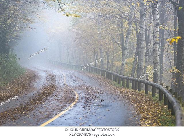 Rural road, in autumn mist Massachusetts, USA