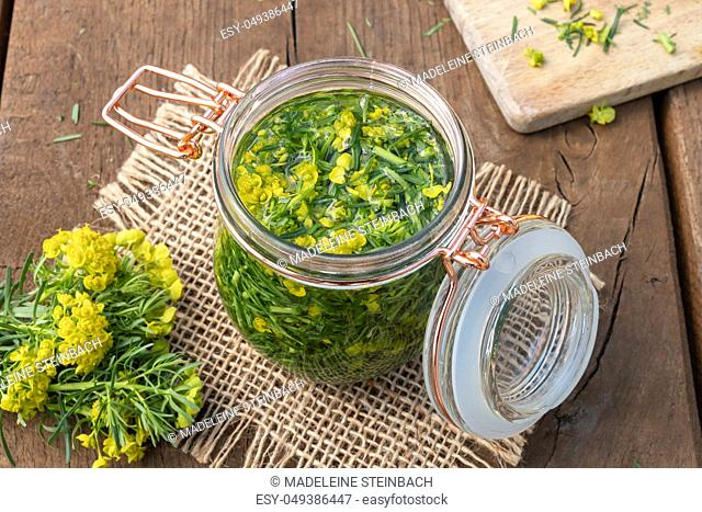 Preparation of herbal tincture from fresh cypress spurge